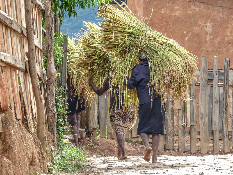 Madagascar - AmbositraMadagascar - Ambositra