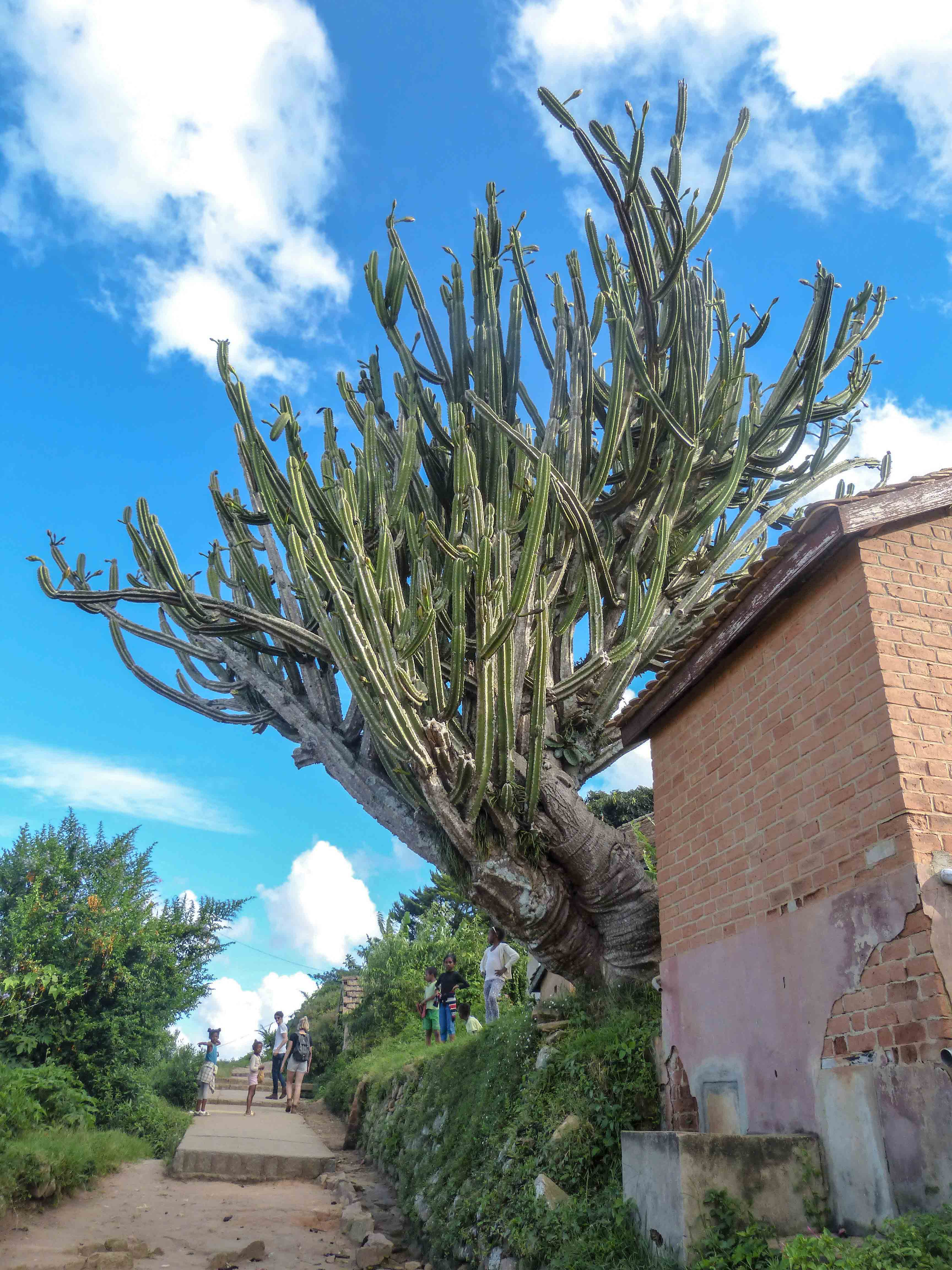 Madagascar - Fianarantsoa