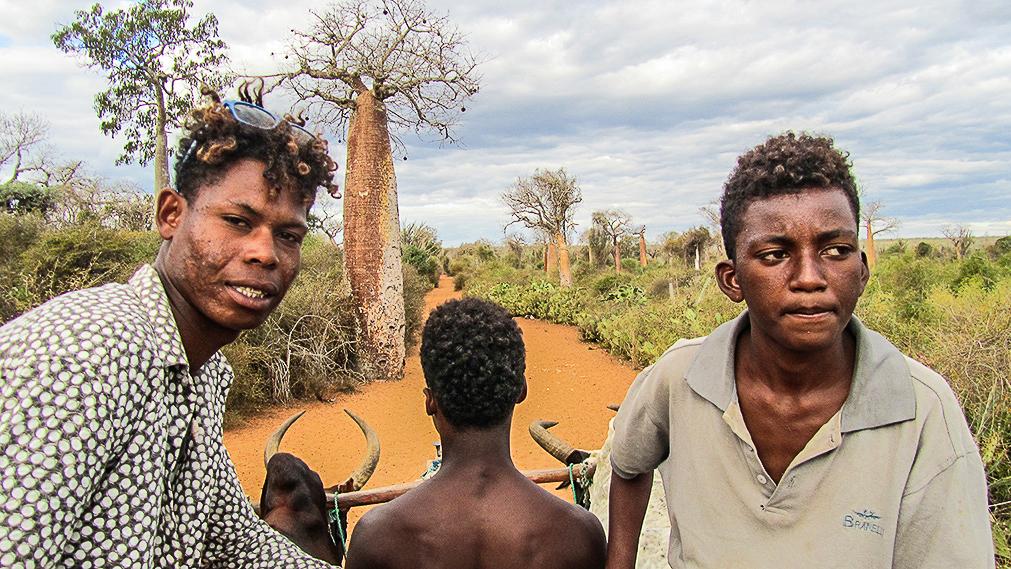 Madagascar - Mangily Ifaty, forêt de baobabs