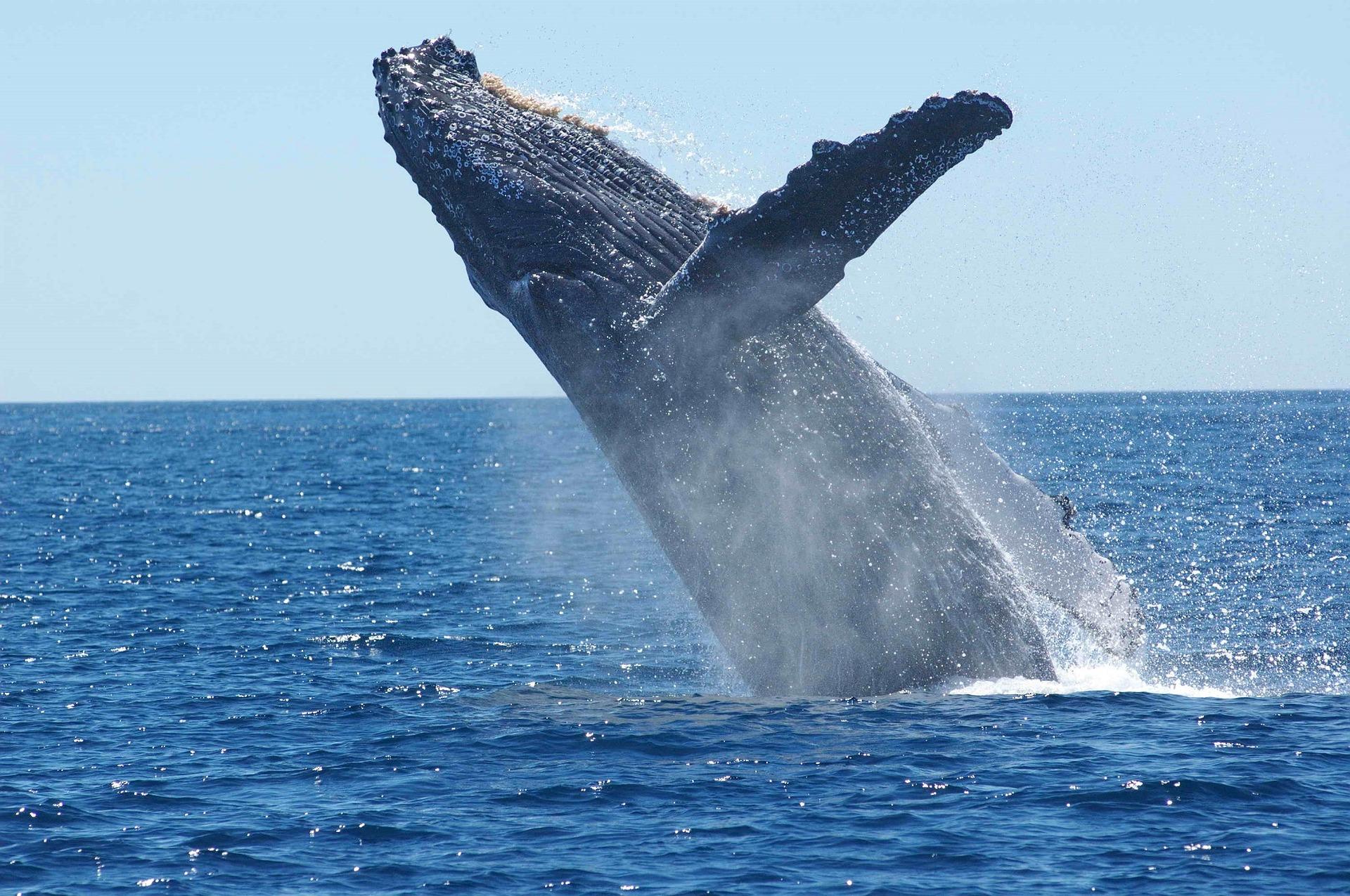 Madagascar - Sainte Marie, baleine