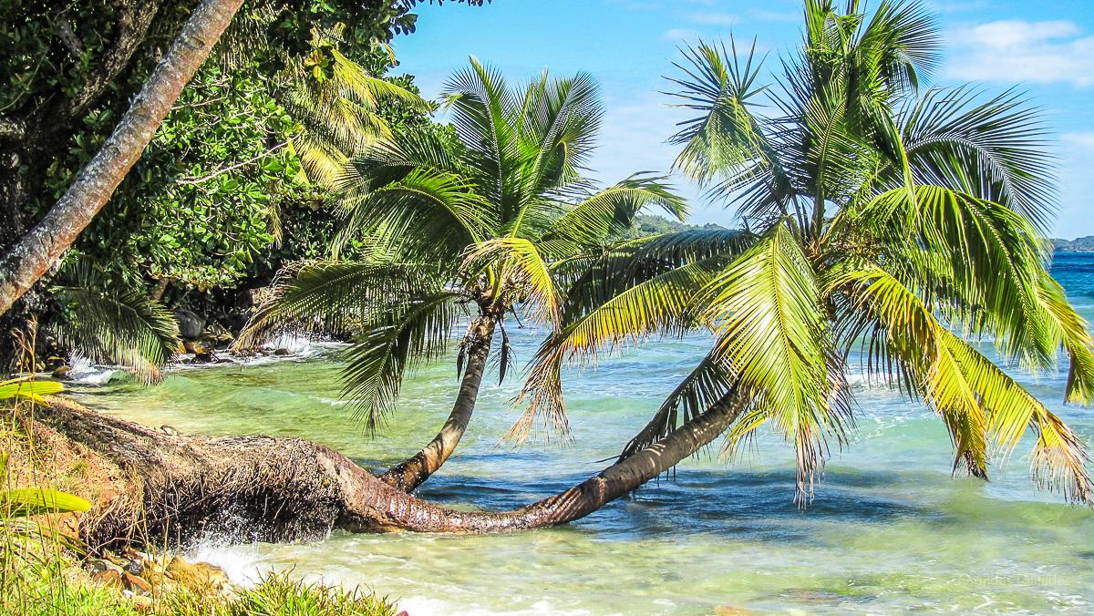Madagascar - Sainte Marie, mer et palmiers